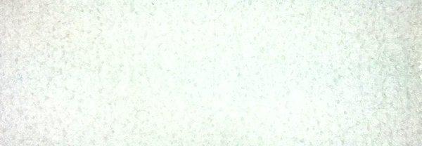 Adoriniデラックスヒュミドール用 アクリルポリマーフリース